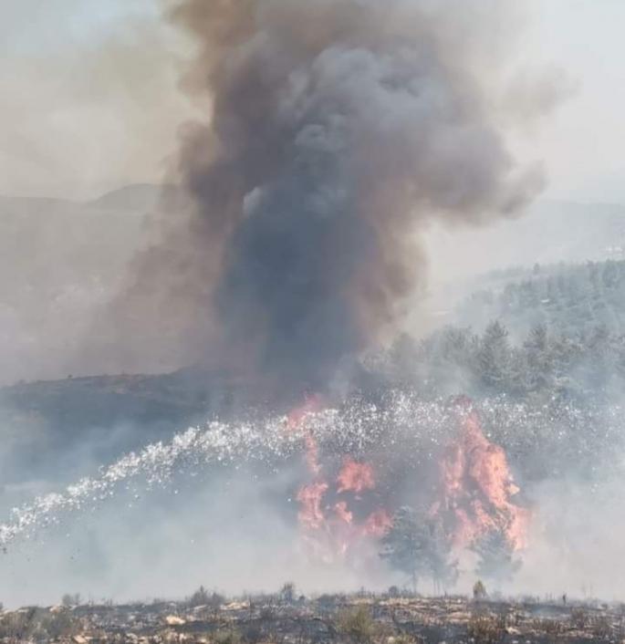 Bodrum'da yangın Kabusu yine başladı! Ekipler müdahale ediyor!