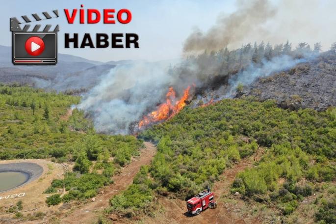 Bodrum ve Milas'ta Çıkan Yangın Sonrası İç Acıtan Görüntüler!