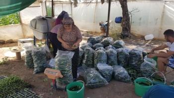CHP'li Girgin'den 'semt pazarları açılsın' çağrısı: Ürünler tarlada kaldı
