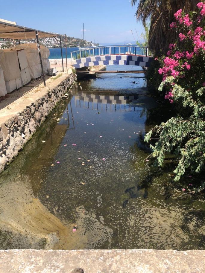 MUSKİ arıtma suyunu dereye bıraktı! Vatandaşlar kokudan evlerinde duramıyor!