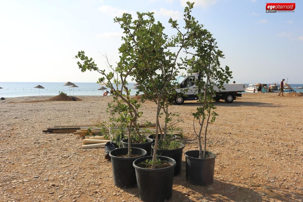 Bodrum'da sahiller ağaçlandırılıyor!!