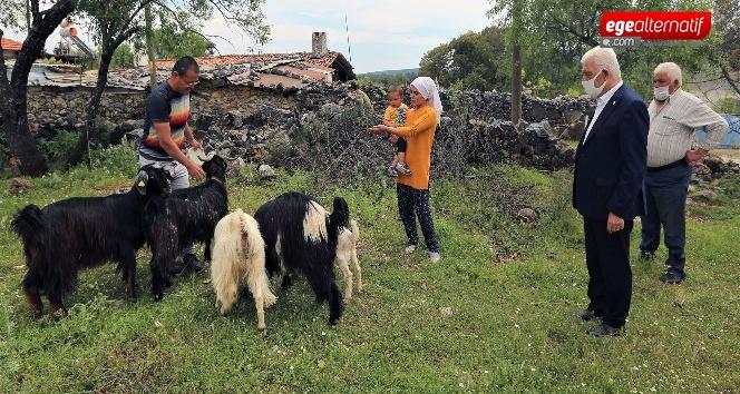 Büyükşehir'den 100 Aileye 300 Kıl Keçisi