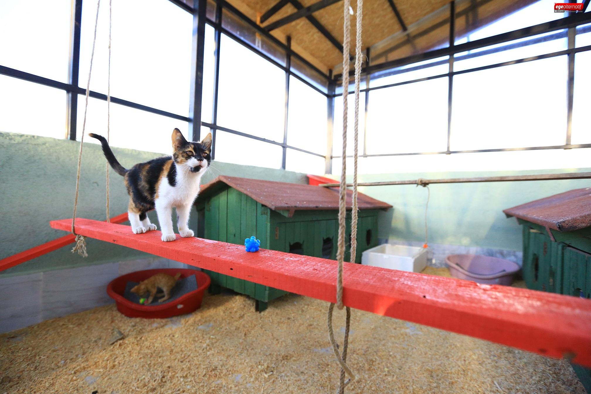 Büyükşehir'den Kediler İçin Kışa Hazırlık