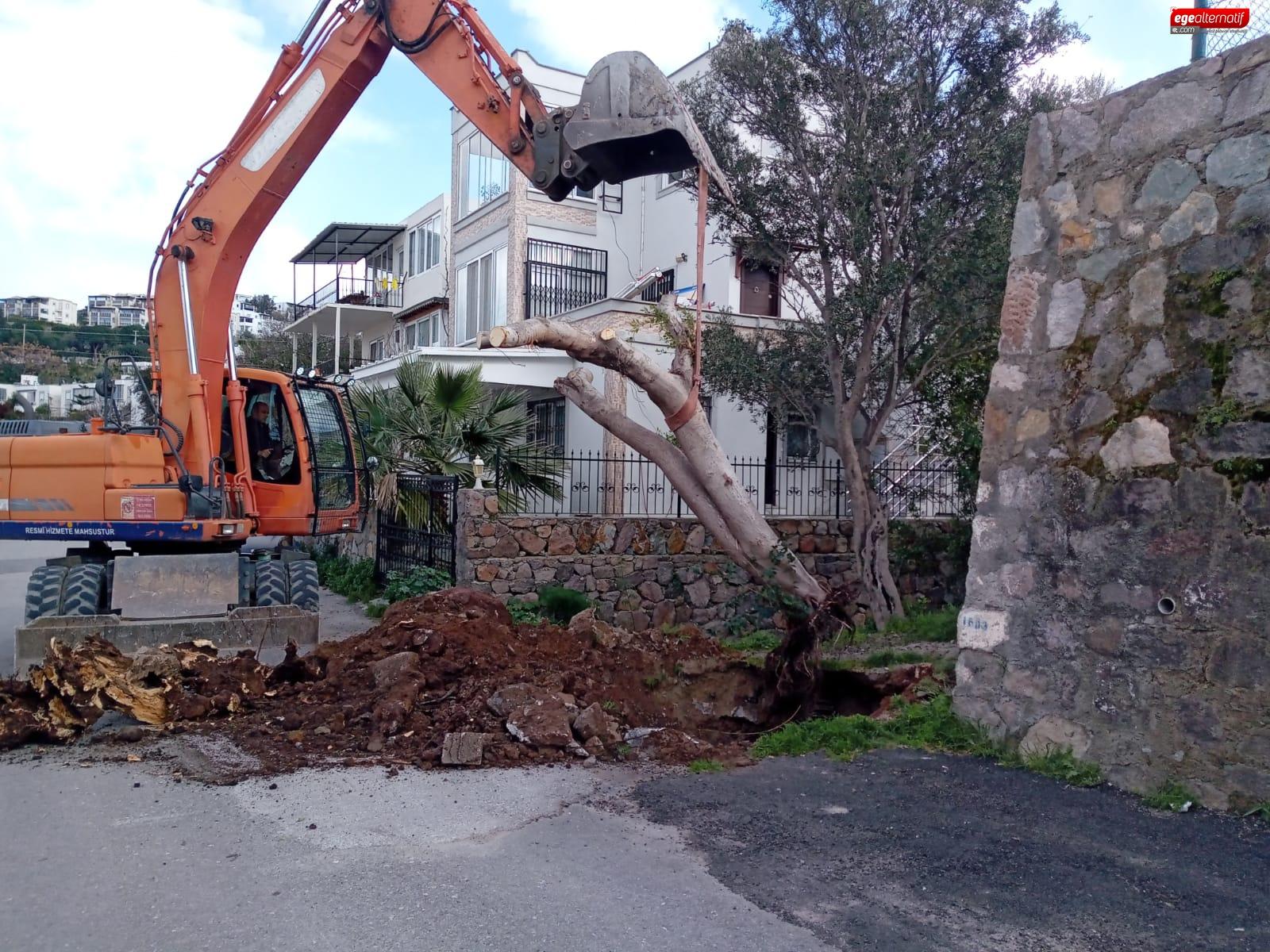 Devrilen ağaçların yerine yenisi dikildi
