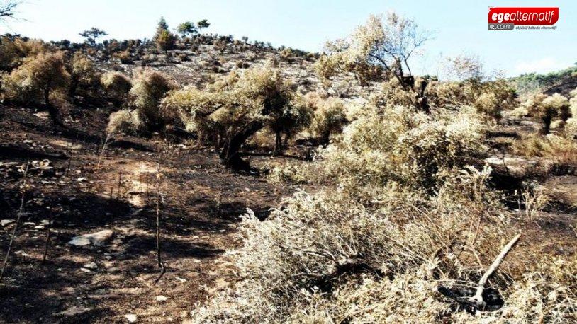 Muğla'daki yangınla ilgili Başkan Tokat'tan korkunç iddia: Bir kez su...