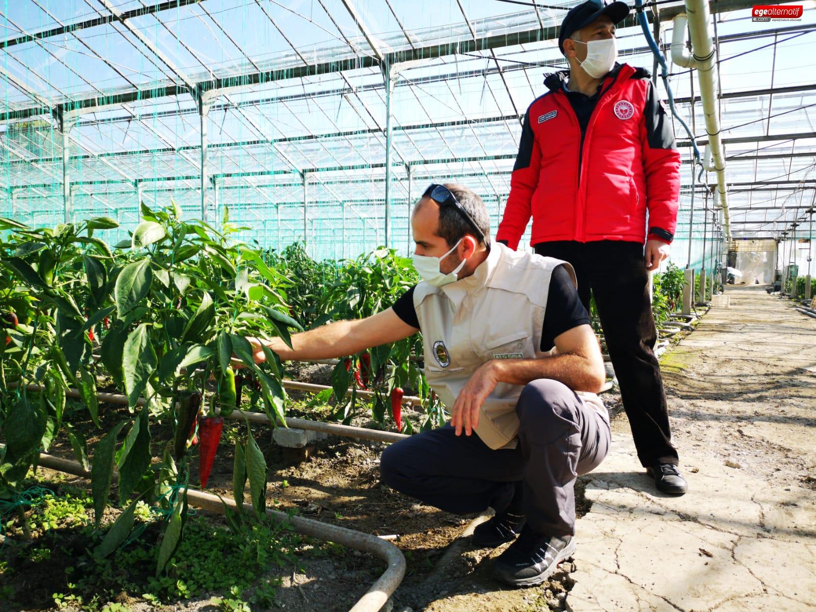 Pandemide köye dönüş başladı! Tarımsal üretim arttı!