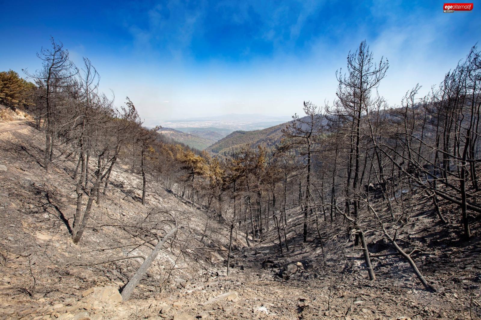 Yangının yıldönümünde Büyükşehir'den Orman İzmir raporu